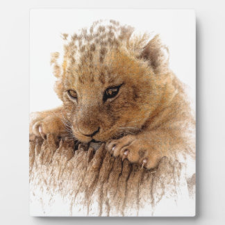Lion cub close cute eyes lookout plaque