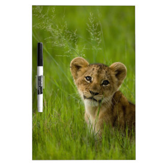Lion Cub In The Tall Grass Dry Erase Board