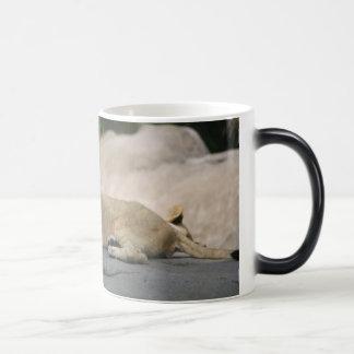 Lion cub morphing mug