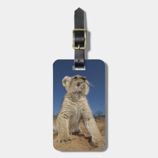 Lion Cub (Panthera Leo) sitting on sand, Namibia Luggage Tag