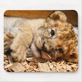Lion cub relaxing mouse pad