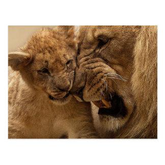 Lion cub with dad postcard