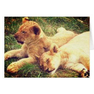 Lion Cubs at Rest Card