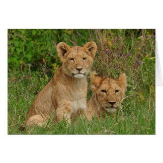 Lion Cubs Note Cards