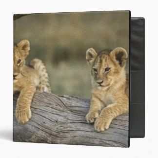 Lion cubs on log, Panthera leo, Masai Mara, 3 Ring Binder