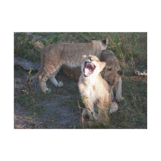 lion cubs teasing canvas print