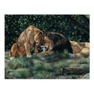Lion Cuddle Postcard