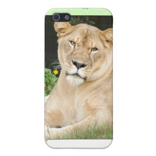 Lion de Barbarie Étui iPhone 5