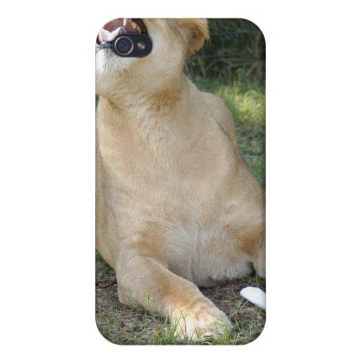 Lion de Barbarie i Étui iPhone 4/4S