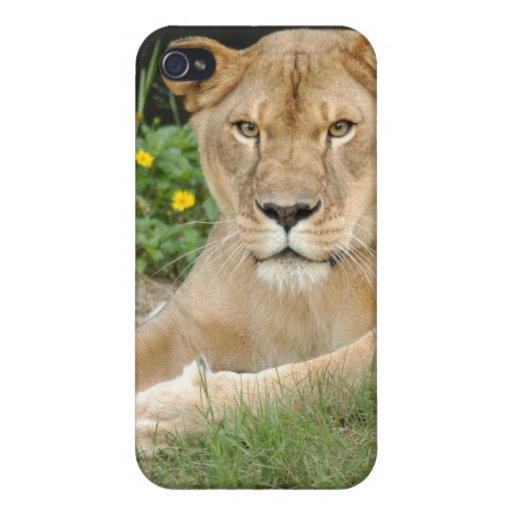Lion de Barbarie i Coques iPhone 4/4S
