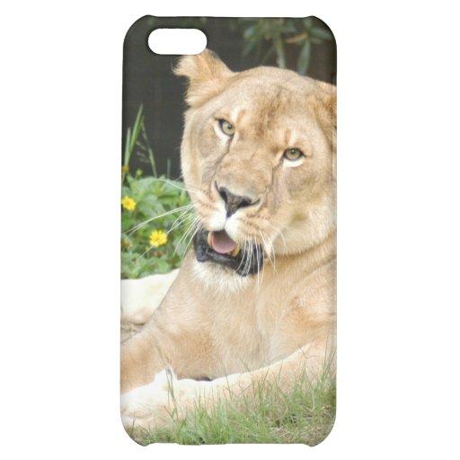 Lion de Barbarie i Étui iPhone 5C