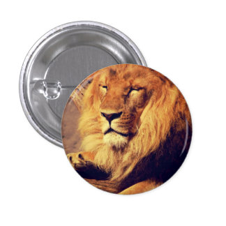 Lion enjoying the afternoon sun 1 inch round button