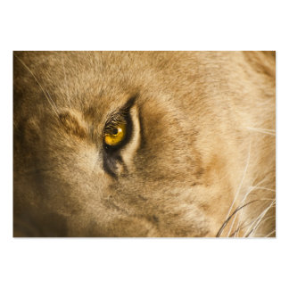 Lion Eye - ACEO 4 Large Business Cards (Pack Of 100)