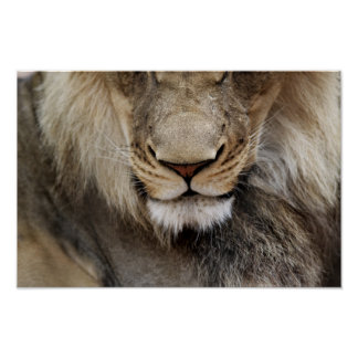Lion Face Photo Poster