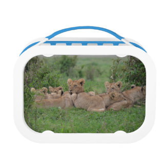 Lion Family Lunch Box