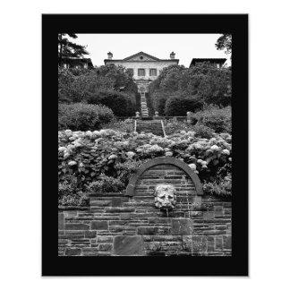 Lion Garden Photo Print