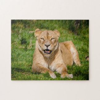 Lion Hanging Out Jigsaw Puzzle