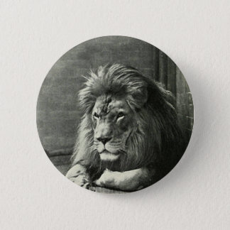 Lion Illustration 2 Inch Round Button