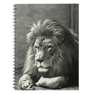 Lion Illustration Note Book