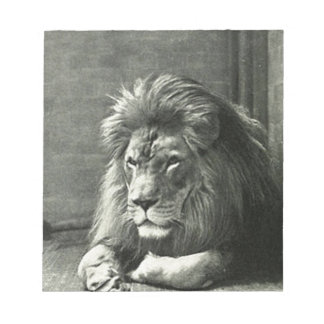 Lion Illustration Notepad