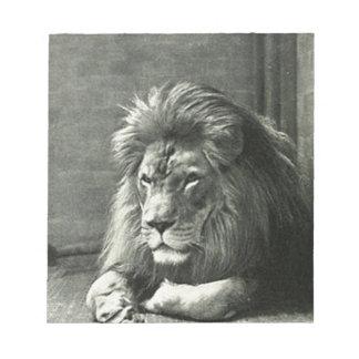 Lion Illustration Notepads