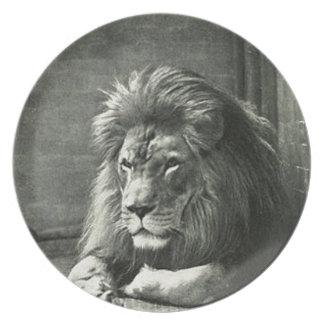 Lion Illustration Party Plates