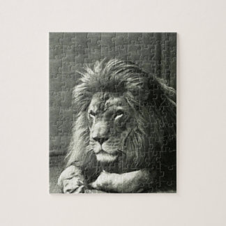 Lion Illustration Puzzles