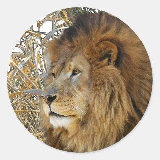 LION IN GRASS CLASSIC ROUND STICKER