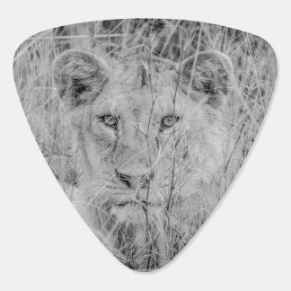 Lion in Grass Guitar Pick