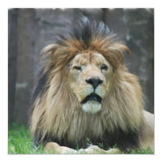 Lion Invitations