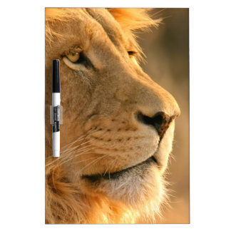 Lion is known to be the King of Beasts Dry Erase Boards
