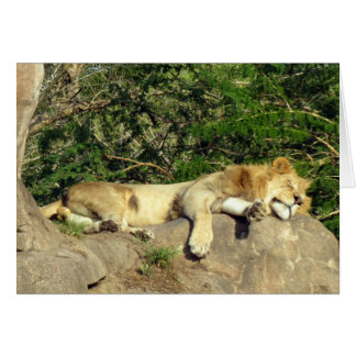 Lion - King of the Jungle - Relaxing Card