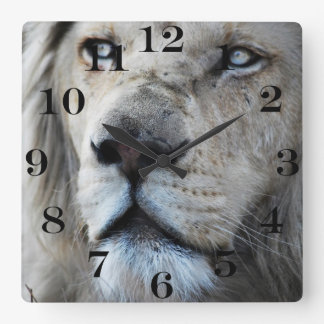 Lion listens to my heartbeat Africa Square Wall Clock