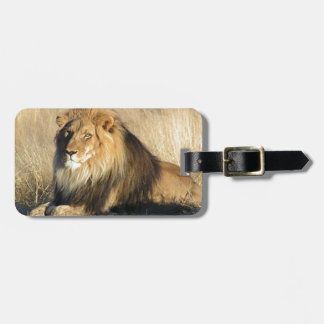 Lion lounging in Nambia Luggage Tag