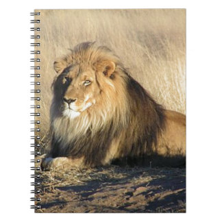 Lion lounging in Nambia Note Books