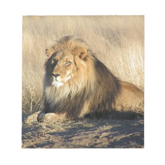 Lion lounging in Nambia Notepad