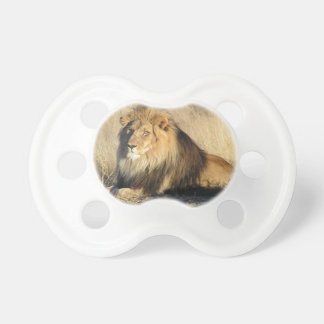 Lion lounging in Nambia Pacifier