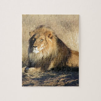 Lion lounging in Nambia Puzzle