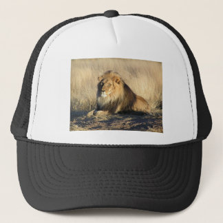 Lion lounging in Nambia Trucker Hat