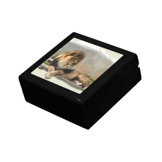 Lion Lovers King of the Jungle Gift Box
