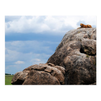 lion lying on a big rock in Tanzania Africa Postcard