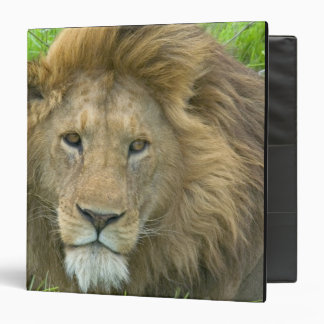 Lion Male Portrait, East Africa, Tanzania, Vinyl Binder