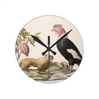 Lion monkey and condor, native to Chile or Ecuador Clock