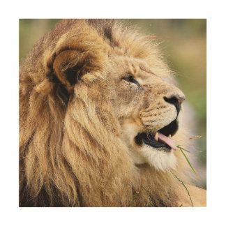 LION OF JUDAH  ART