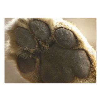 Lion Paw - ACEO 5 Large Business Cards (Pack Of 100)