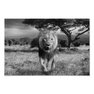 lion photo art