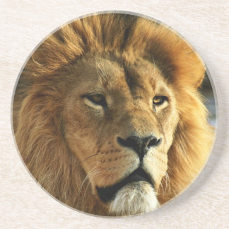 Lion Photo Drink Coaster