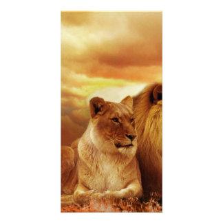 Lion Photo Greeting Card