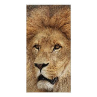 Lion Customized Photo Card