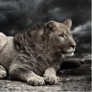 Lion Photo Sculpture